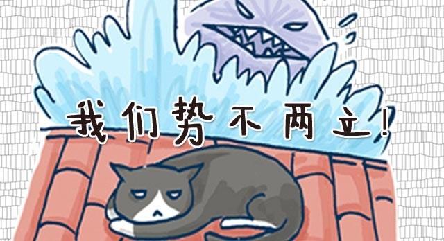 猫和鱼的故事