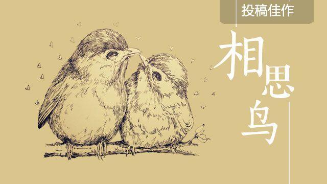 相思鸟 | @Y蓝色的叶子M