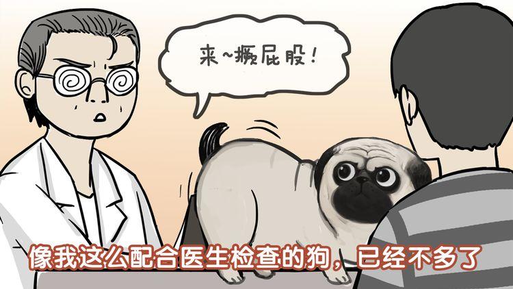 第78话 带宠物看病(上)